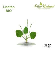 Llantén (Plantago lanceolata) de cultivo biológico 30 gr. Pilar Nature